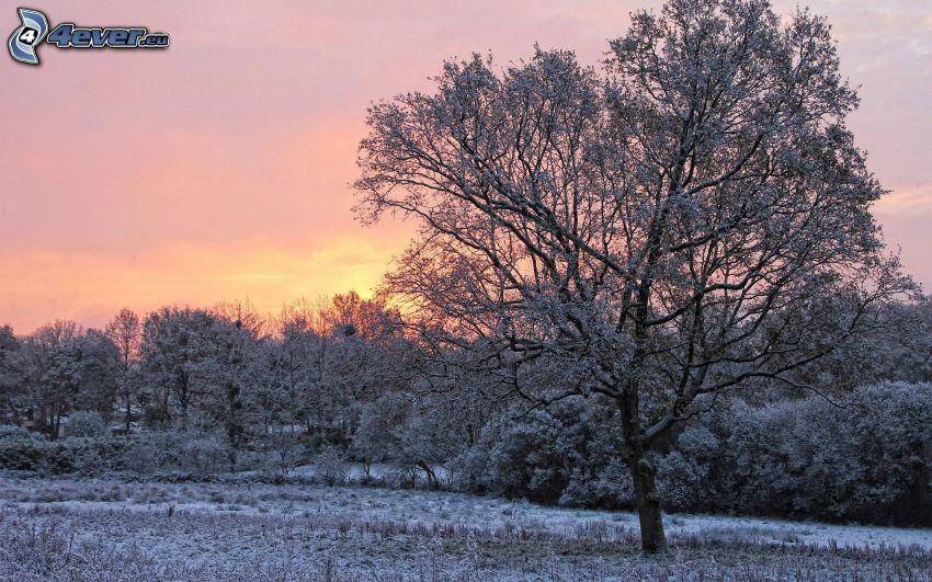 verschneite Bäume, Sonnenuntergang im Winter, gefrorene Landschaft