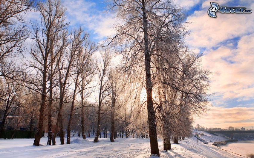 verschneite Landschaft, Bäume, Sonne