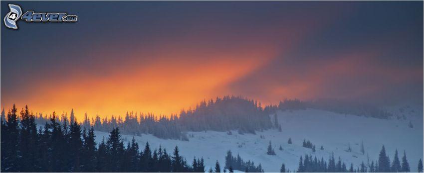 verschneite Landschaft, Nadelbäume, orange Sonnenuntergang