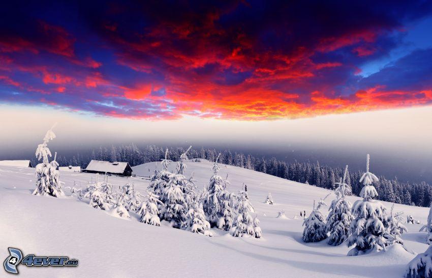 verschneite Landschaft, verschneite Bäume, Himmel, dunkle Wolken, Hütte