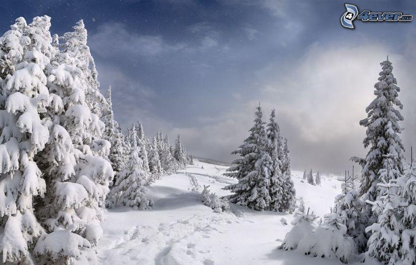 verschneite Landschaft, verschneite Bäume
