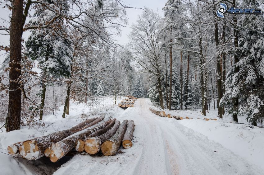 verschneite Landschaft, Weg im Winter, Holz