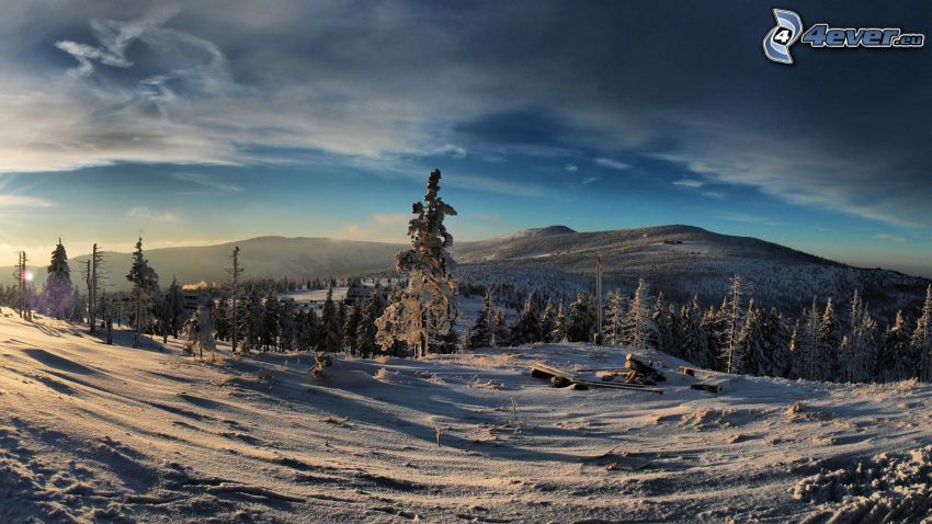 verschneiter Wald, Berge, Schnee