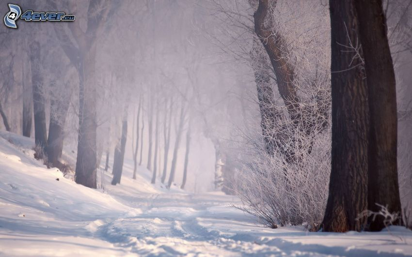 verschneiter Wald, Spuren im Schnee