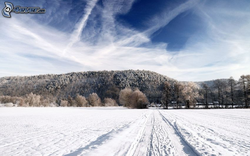 verschneiter Wald, verschneite Wiese, Spuren im Schnee