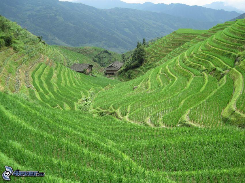 Vietnamesische Reisfelder, Hütten