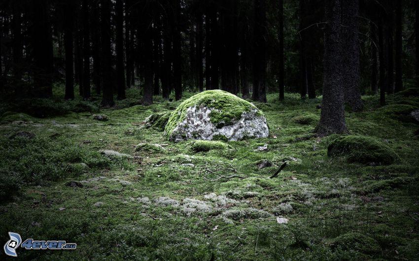 Wald, Felsen, Moos