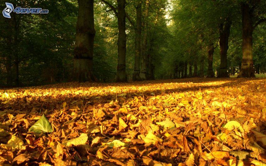 Wald, herbstliche Blätter