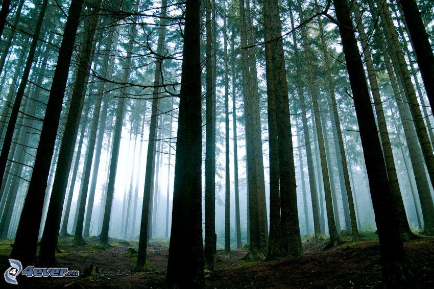 Wald, Licht