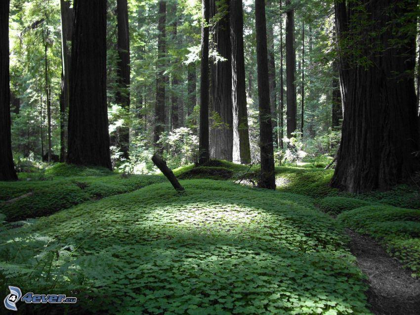 Wald, Pflanzen