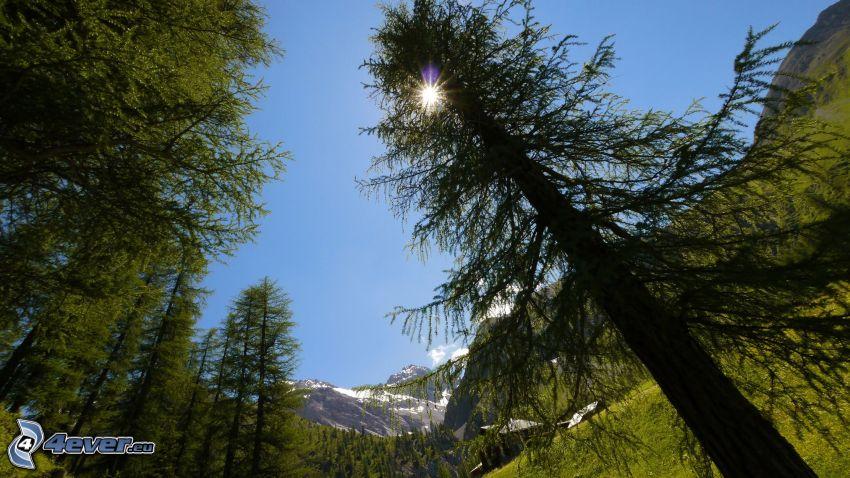 Wald, Sonne, Berge