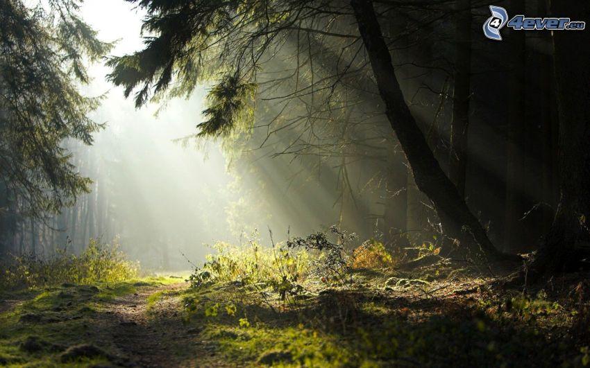 Wald, Sonnenstrahlen