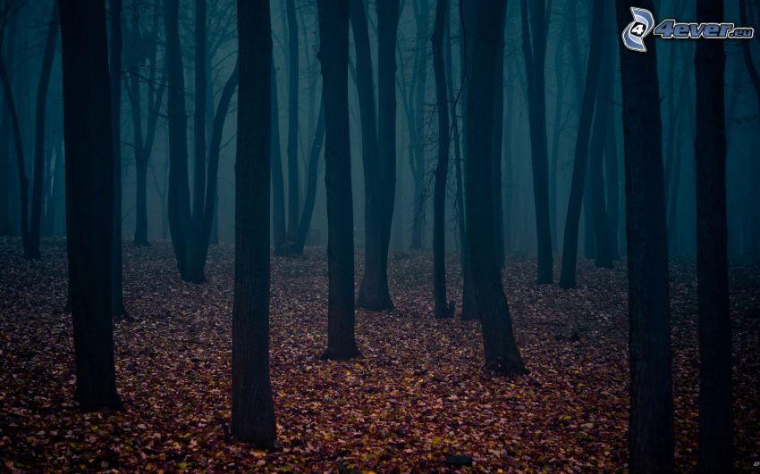Wald, Stämme, trockene Blätter