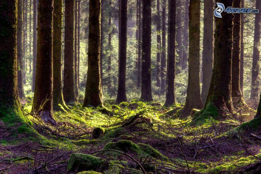 Wald, Stämme