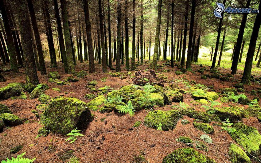 Wald, Steine, Moos