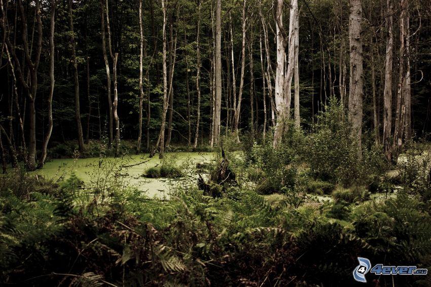Wald, Sumpf
