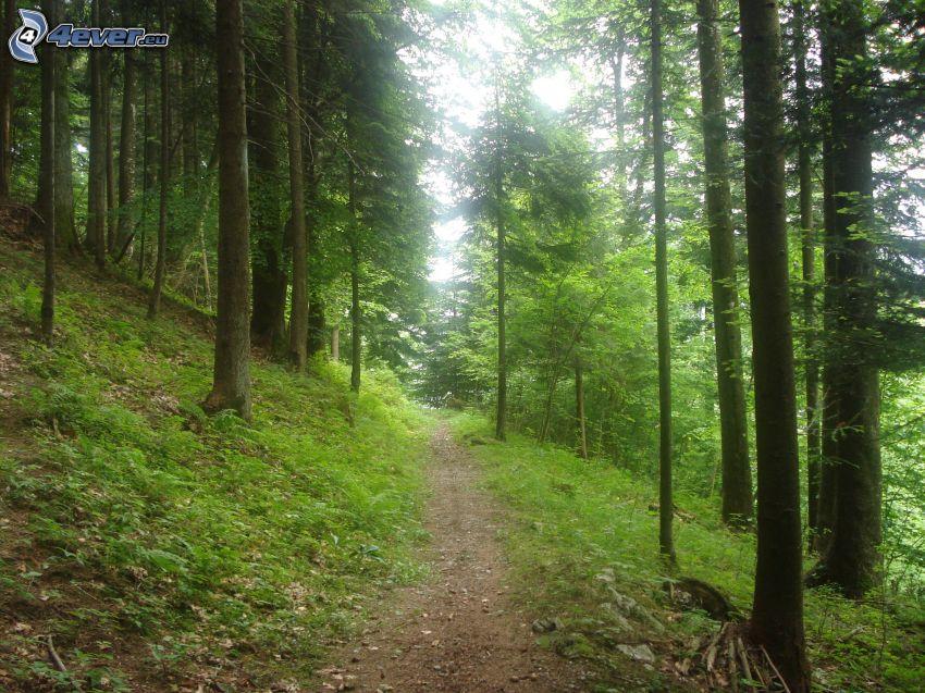 Wald, Waldweg