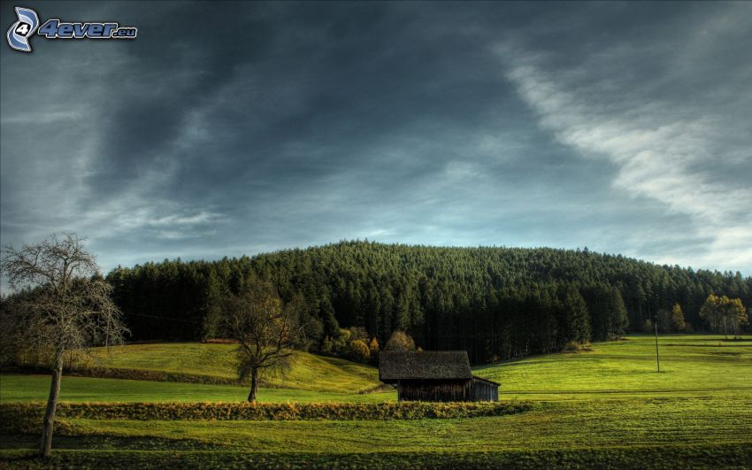Wald, Wiese, Hütte, dunkler Himmel