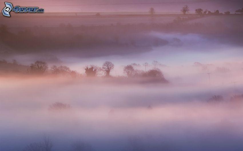Wälder und Wiesen, Boden Nebel