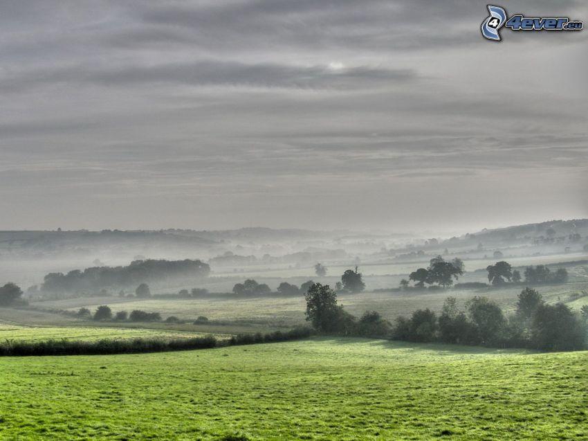 Wälder und Wiesen, grauen Himmel, Boden Nebel