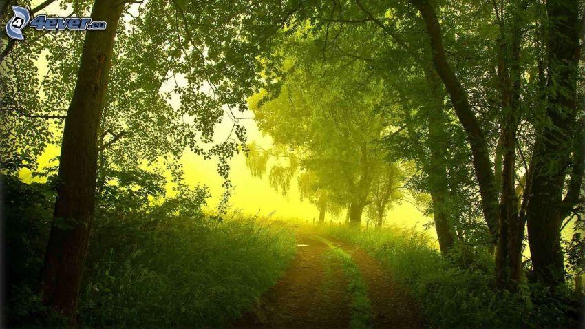 Waldweg, grüne Bäume