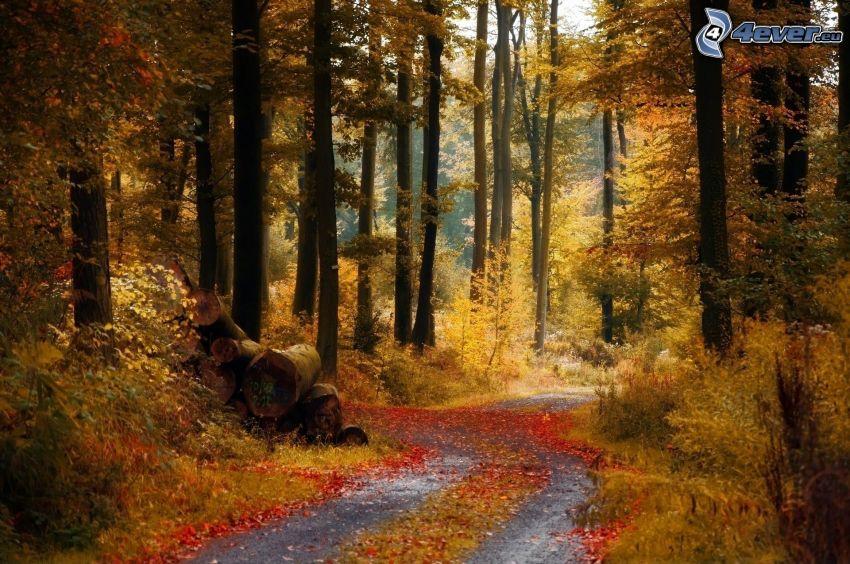 Waldweg, herbstlicher Wald