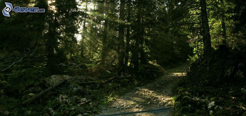 Waldweg, Sonnenstrahlen im Wald, Dunkler Wald