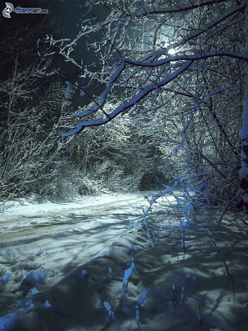 Waldweg, verschneiter Wald