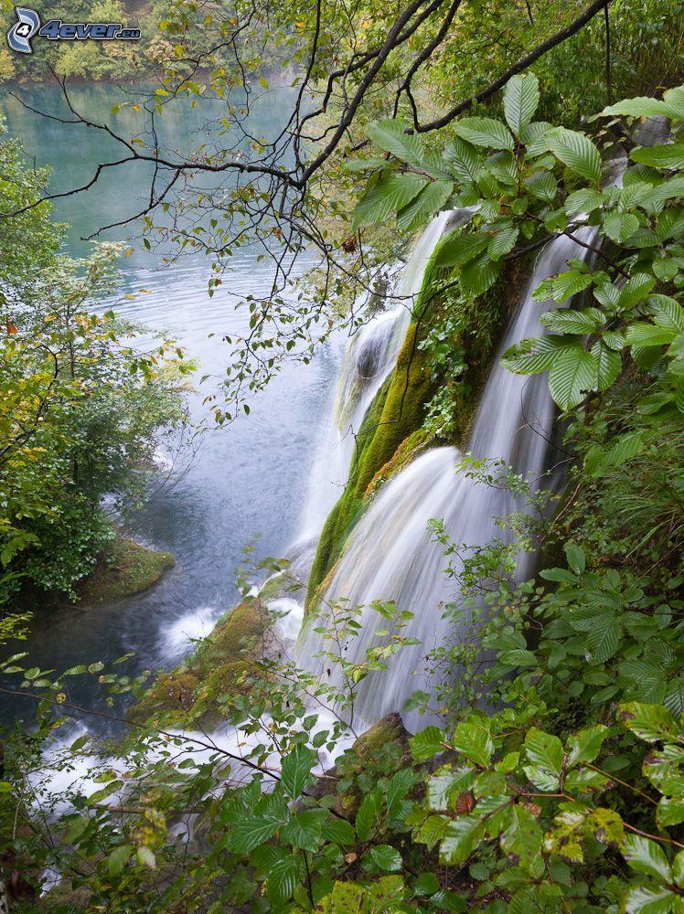 Wasserfall, Grün, See im Wald