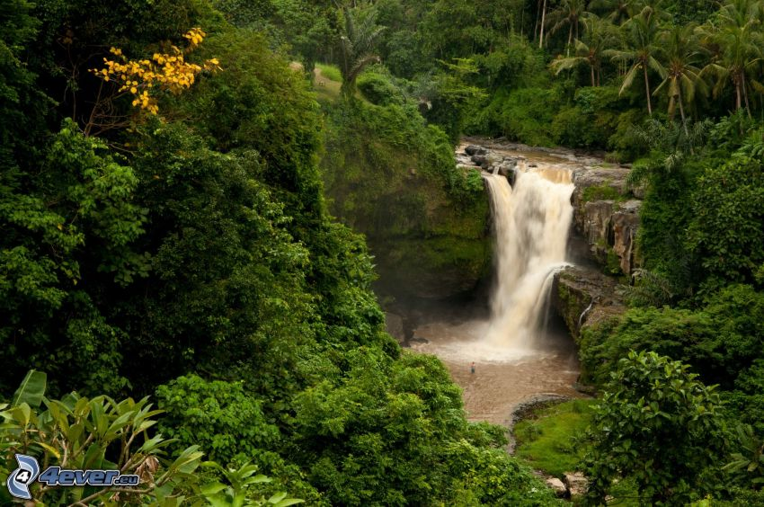 Wasserfall im Urwald, Grün