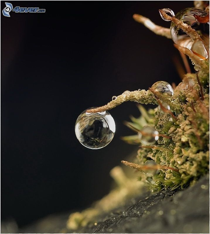 Wassertropfen, Pflanze, Makro