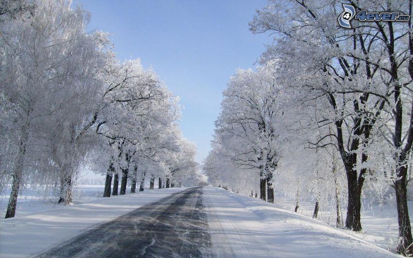 Weg im Winter, verschneite Bäume
