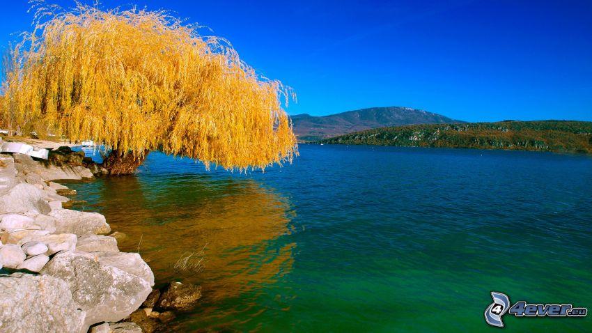 Weide, Fluss, gelber Baum, Berge