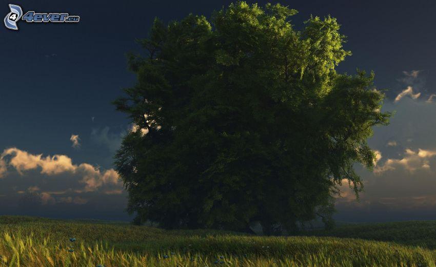 weitausladender Baum, Feld