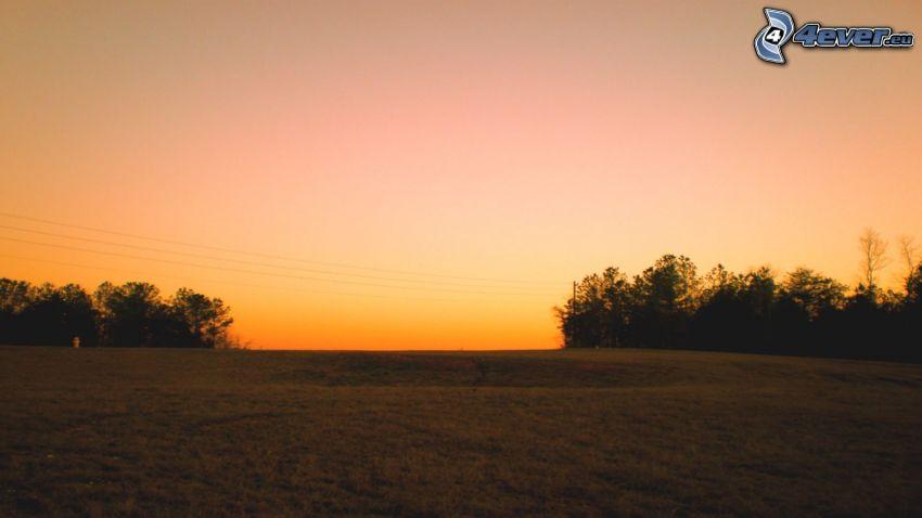 Wiese, Abendhimmel, Bäum Silhouetten
