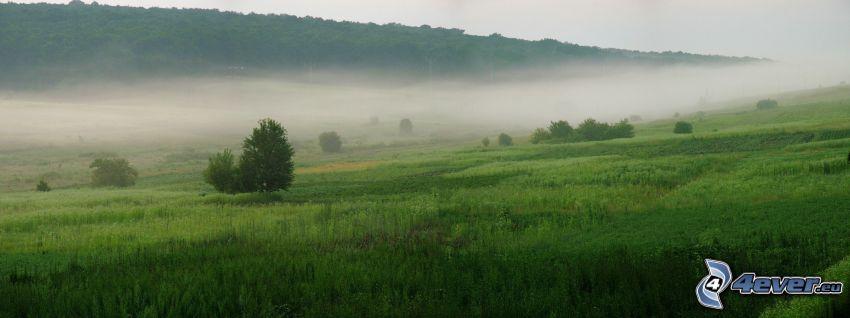 Wiese, Boden Nebel, Wald, Panorama