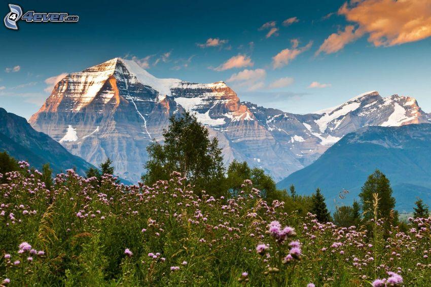 Wiese, Distel, schneebedeckte Berge