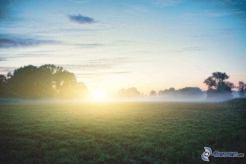 Wiese, Sonnenaufgang, Boden Nebel
