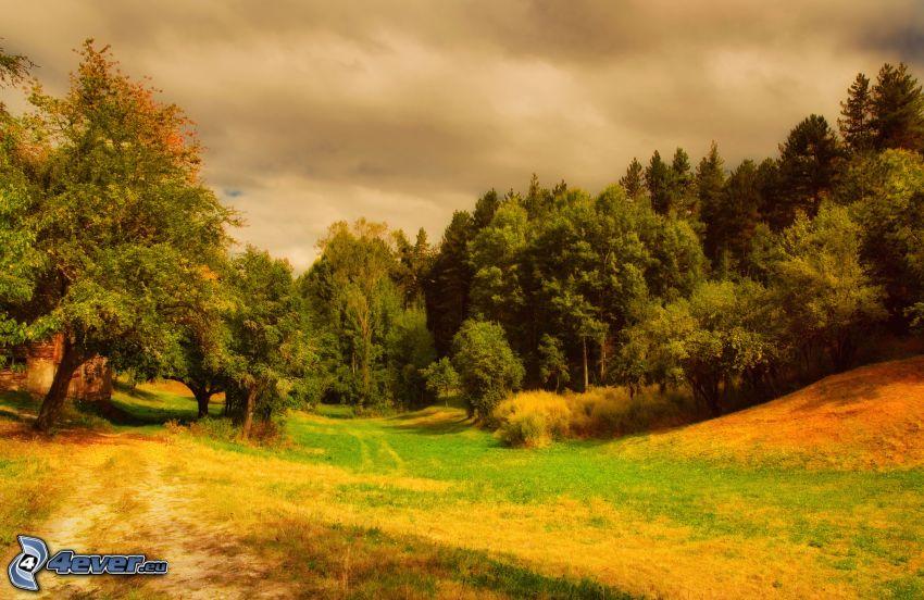 Wiese, Wald, Feldweg, wolkenbedeckt