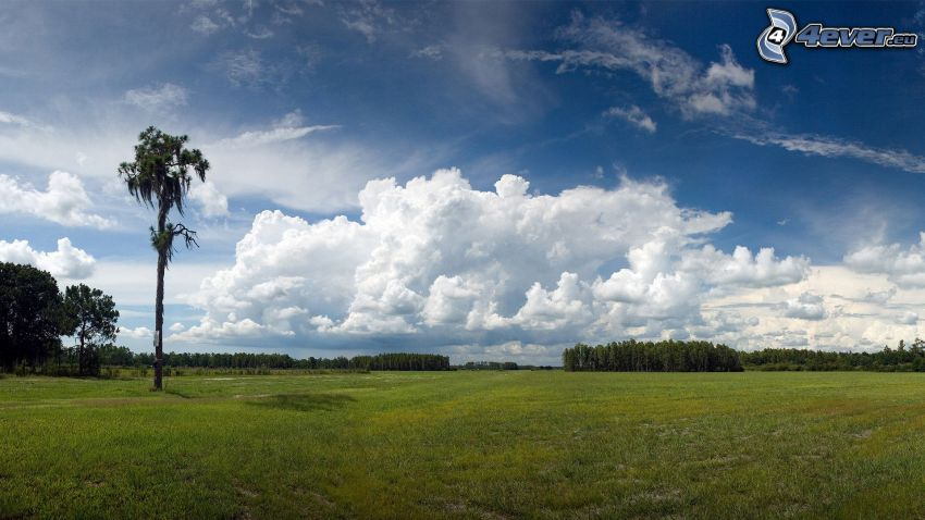 Wiese, Wolken, Bäume