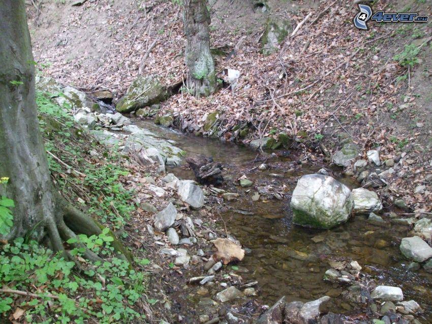 Wildbach, Baum, Bach, trockene Blätter