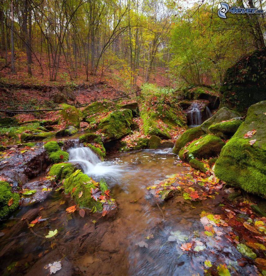Wildbach, Felsen, Moos, herbstlicher Wald