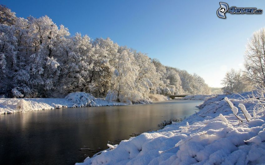 Winterfluss, verschneite Bäume