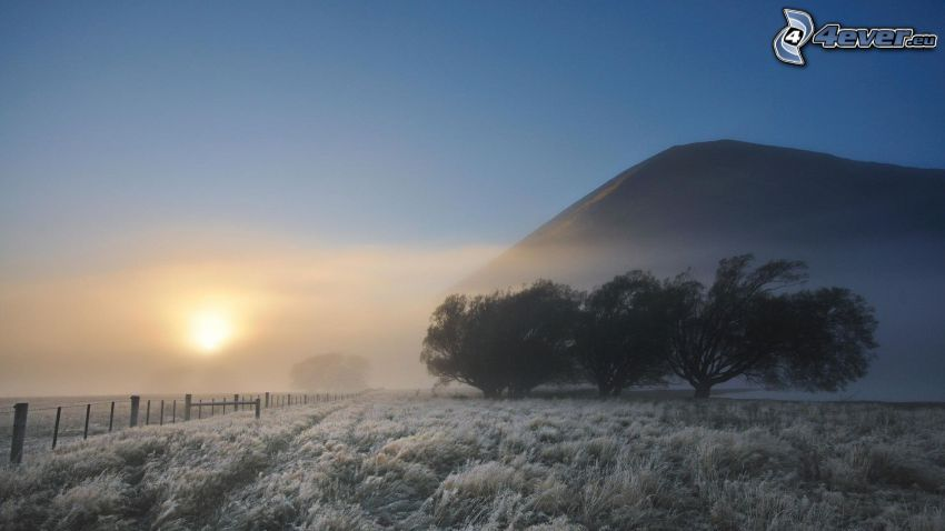 Winterlandschaft, nebliger Morgen, gefrorenes Gras