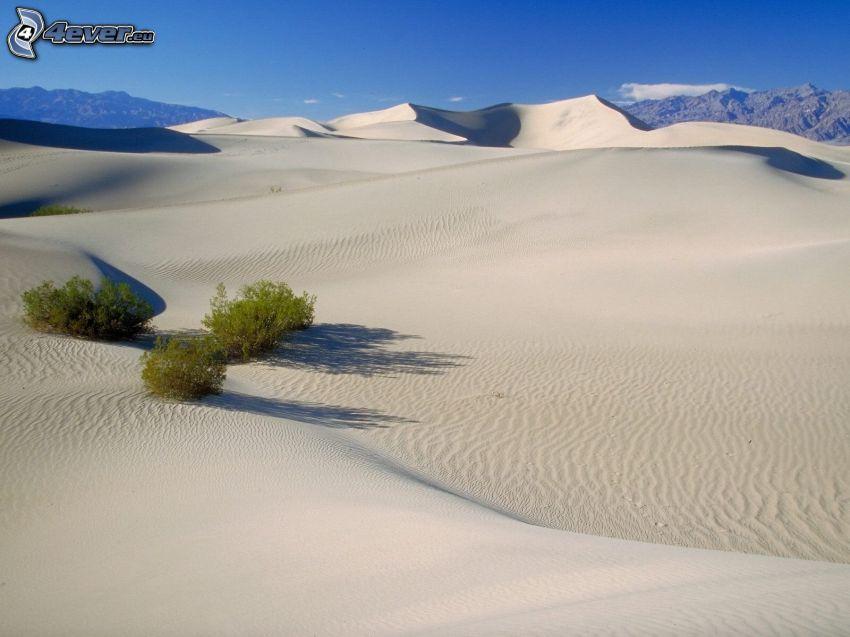 Wüste, Büsche