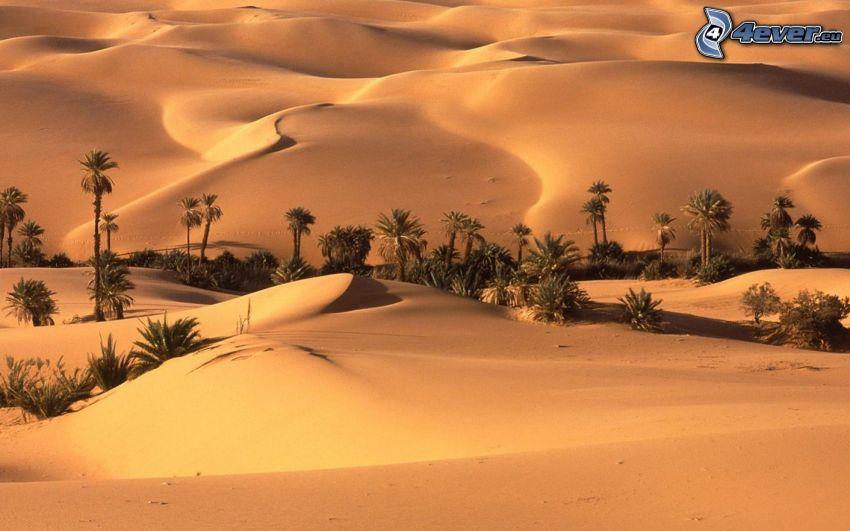 Wüste, Palmen