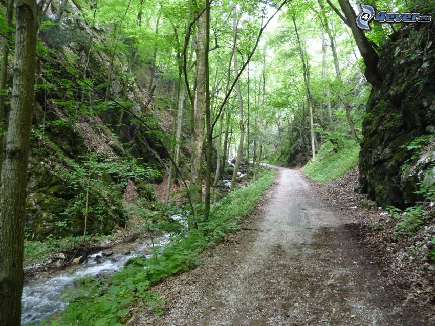 Zádielska Tal, Slowakei, Pfad durch den Wald, Bäume