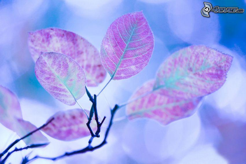 Zweig, Blätter