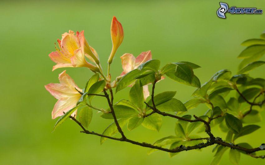 Zweig, Blumen