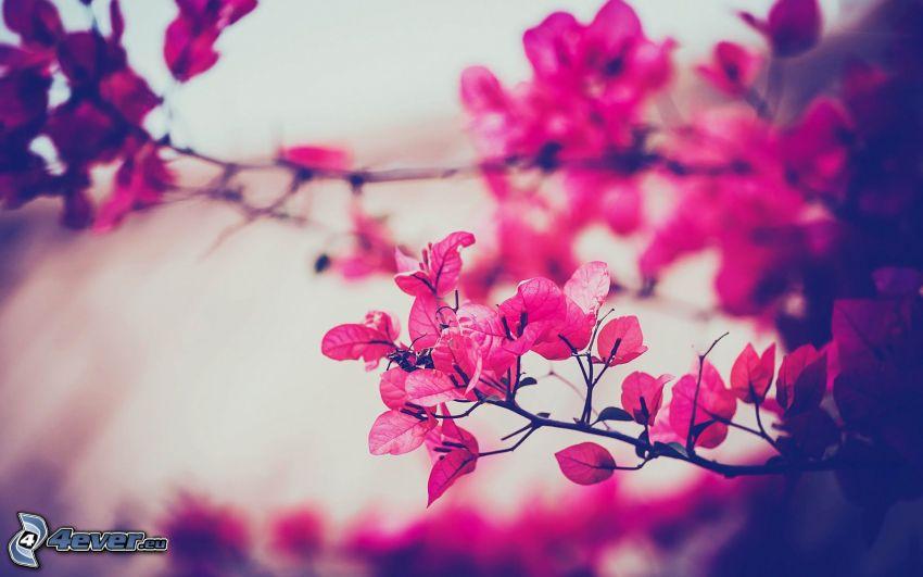 Zweig, rote Blätter
